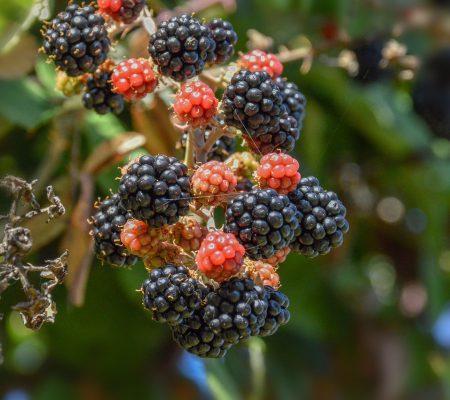 fruit, nature, food